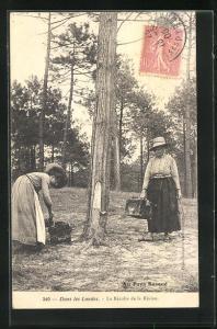 AK Pays Basque, La Récolte de la Résine, Arbeiterinnen in der Forstwirtschaft