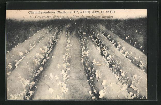 AK Cinq-Mars, Champignonières Chalbot & Cie., vue de quelques meules, Pilz-Anbau 0