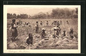 AK Indonesien, Frauen und Kinder bei der Feldarbeit, Padioogst Res. Kedirix