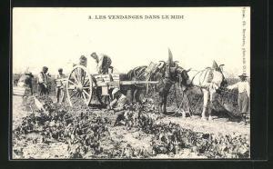 AK Les Vendanges dans le Midi, Weinlese und Transport der Trauben