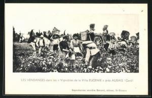 AK Les Vendanges dans les Vignobles de la Villa Eugenie près Aubais, Weinlese