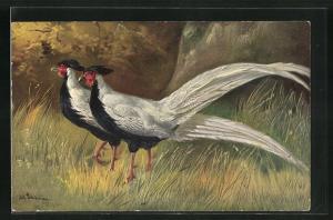 Künstler-AK Alfred Schönian: Silver Pheasant, Silberfasan am Waldrand