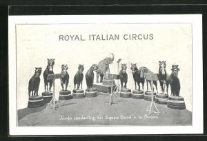 AK Royal Italian Circus, Jumbo conducting his Equine Band a la Sousa, Elefant dirigiert eine Pferdeband im Zirkus