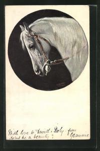 Künstler-AK Alfred Schönian: Schimmel mit Zaumzeug, Pferd
