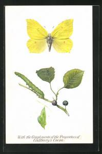 AK Kakao, Raupe und gelber Schmetterling, Cadbury`s Cocoa