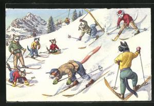 AK Katzen vergnügen sich beim Wintersport, vermenschlichte Tiere
