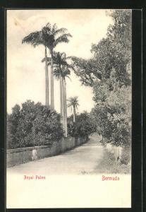 AK Bermuda, Royal Palms