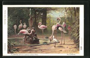Künstler-AK Flamingos im Zoologischen Garten