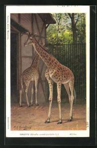 Künstler-AK Giraffen im zoologischen Garten