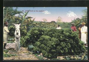 AK Costa Rica, Pilling fruit on the platform