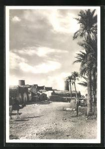 AK Mizda, Blick auf Weg mit Häusern und Türme, Dromedar und Palmen