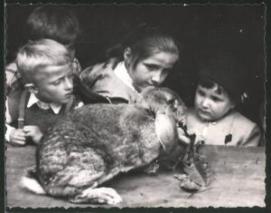 Fotografie Kinder füttern Kaninchen, Zucht-Kaninchen