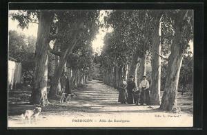 AK Pardigon, Allèe des Eucalyptus
