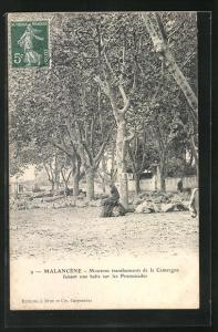 AK Malancene, Moutons transhumants de la Camargue faisant une halte sur les Promenades