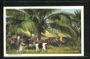 AK Puerto Rico, A sheltering Palm, Bauern mit Maultieren im Schatten einer Palme