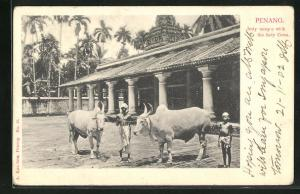 AK Penang, Jetty temple with the holy Cows