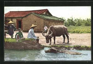 AK Taiwan, Buffalo & Peasants Dwelling
