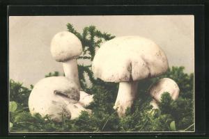 AK Champignons wachsen auf dem Waldboden, Pilz