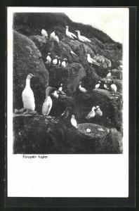 AK Färöer, Foroyskir fuglar, Seevögel auf Klippe