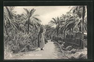 AK Basra, Date Palms
