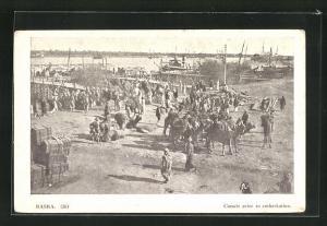 AK Basra, Camels prior to embarkation