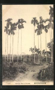 AK Formosa, Binroojyo Wood