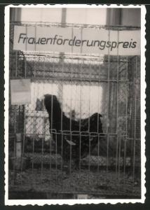 Fotografie Frauenförderungspreis, Huhn - Geflügel im Käfig