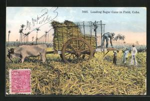 AK Cuba, Loading Sugar Cane in Field