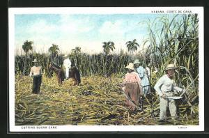 AK Cutting sugar cane, Feldarbeiter schneiden Zuckerrohr