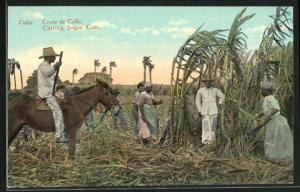 AK Cuba, Cutting Sugar Cane, Feldarbeiter schneiden Zuckerrohr