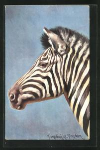 Künstler-AK Ermenegildo Carlo Donadini: Bildnis eines Zebras