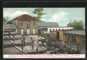 AK S. Thome, Descarga do cacao dos carros para seccar nos taboleiros, roca Vista Alegre