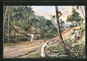 Künstler-AK St. Lucia, gathering cocoanuts, Sammeln von Kokosnüssen