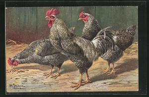 Künstler-AK Alfred Schönian: Schwarz-weiss gefärbte Hühner picken nach Futter