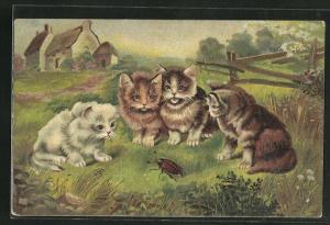 AK Katzen beobachten einen Maikäfer