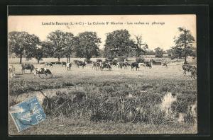 AK Lamotte-Beuvron, La Colonie St. Maurice, Les vaches au paturage