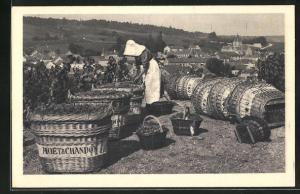 AK Mesnil-sur-Oger, Scène du vendange, Weinlese, Moet & Chandon