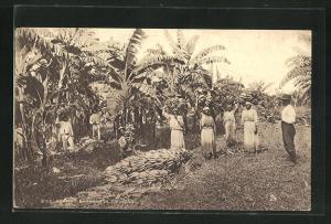 AK Trinidad, Reaping Bananas, Bananenernte