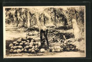 AK Malaya, Husking Cocoanuts, Cocoanut Plantation
