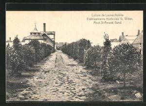 AK Mont-Saint-Amand, Etablissements Horticoles, G. Wibier, Culture de Laurus Nobilis