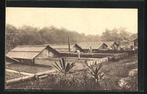 AK Trinidad, Cacao Drying, Kakaoplantage