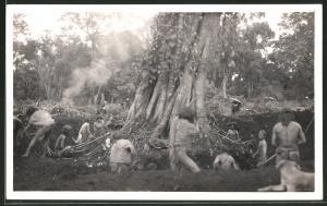 Fotografie Eingeborene Baumfäller, Naturvolk fällt einen Urwaldriesen
