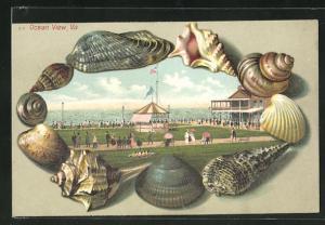Passepartout-Lithographie Ocean View, VA, Muscheln