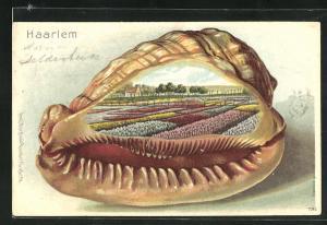 Passepartout-Lithographie Haarlem, Tulpenfarm, Muschel