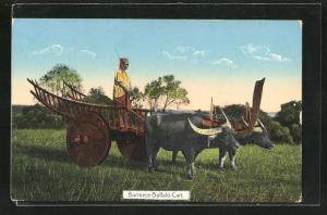 AK Burma, Burmese Buffalo Cart