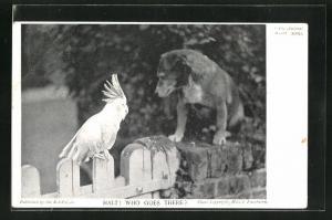 AK Tierschutz R.S.P.C.A., Papagei und Hund auf einem Zaun