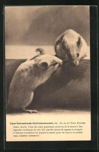 AK Ligue Internationale Antivivisectionniste, Mäuse, Tierschutz