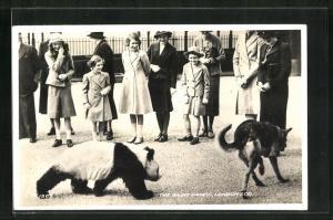 AK London, Prinzessin Elisabeth und Prinzessin Margaret betrachten die Pandabären im Londoner Zoo