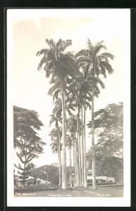 Foto-AK Trinidad, Country Club, The Palms
