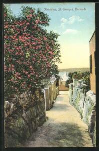 AK St. Georges, Blühender Oleander im Ort
